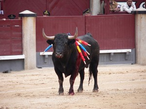 Does the Spanish Word Toro Come from Latin?